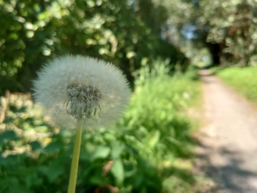 We manually focused on the outside of the dandelion.
